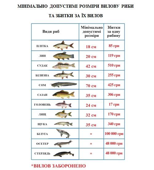 Мінімально допустимі розміри вилову риби та збитки за їх вилов