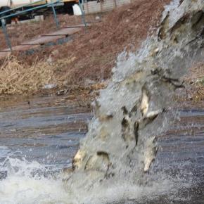 У водойму поблизу с. Наварія вселять понад 6 тис. екз. риб