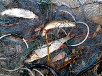 Зафіксовано 772 порушення зі збитками на майже 97 тис. грн, - Львівський рибоохоронний патруль
