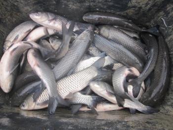 У Завадівське водосховище випустили понад тонну водних біоресурсів