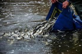 У «Завадівське» водосховище вселять 22 тис. екз. риб