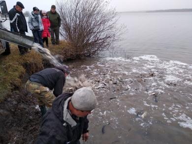 У «Завадівське» водосховище вселено 1 350 кг риби, - Львівський рибоохоронний патруль